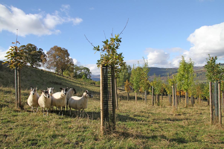 Regenerative Agriculture and Land Use Workshop
