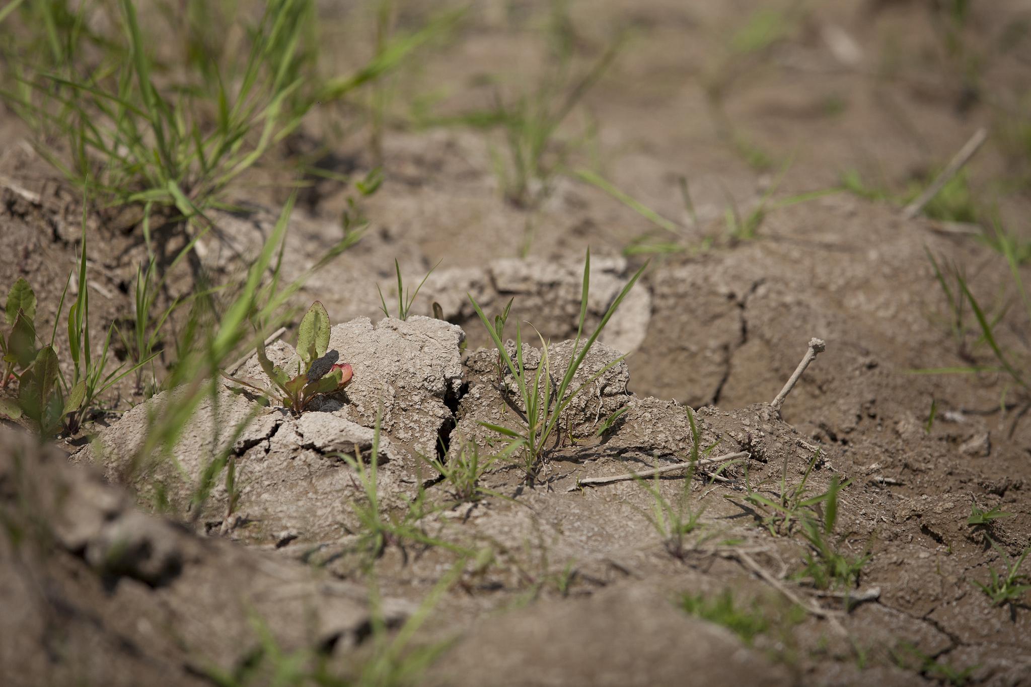 Soils and biodiversity regeneration for Soil salinization