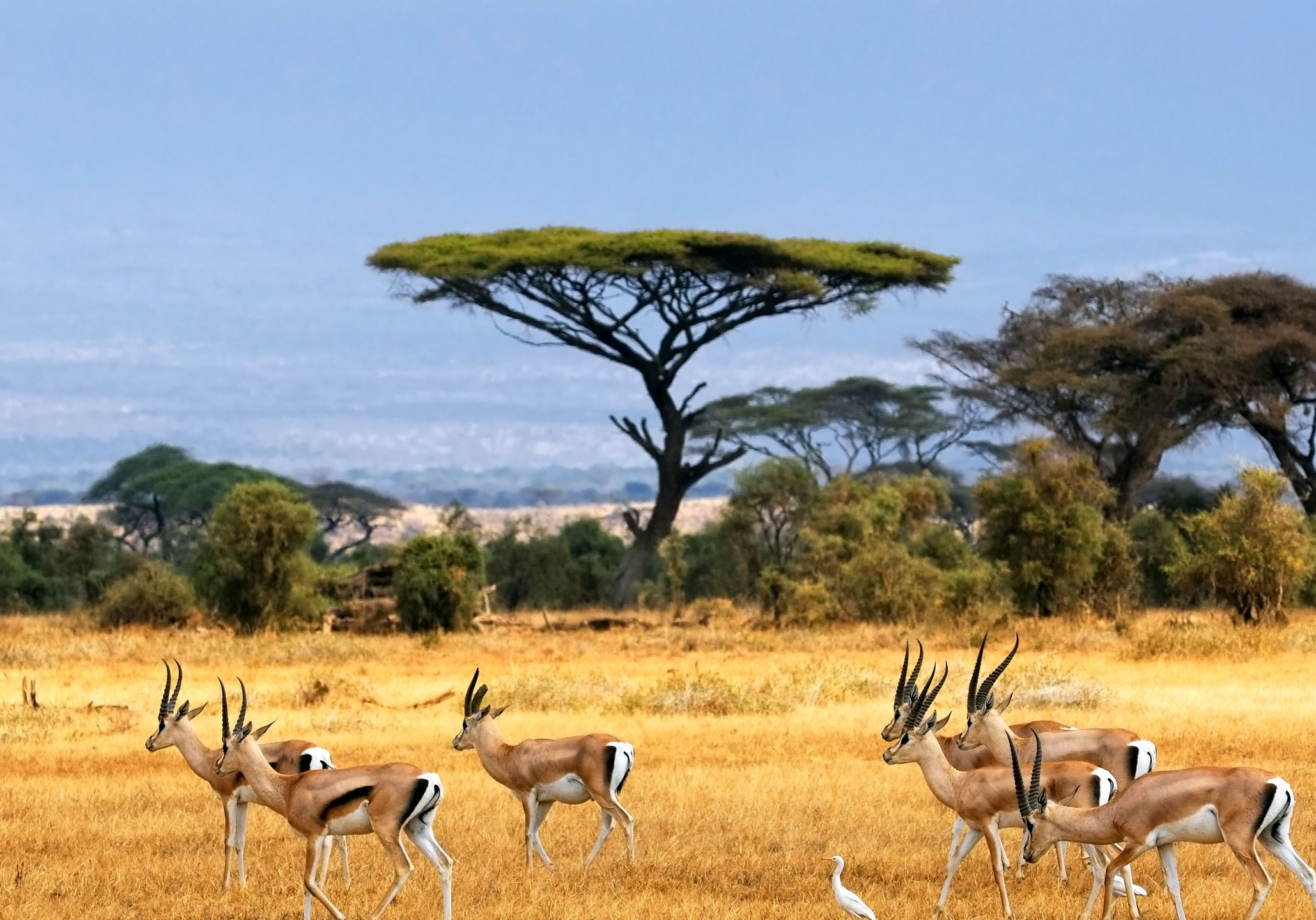 Pictures-of-the-African-Savannah-1-1-1