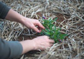 soil gardening planting hands
